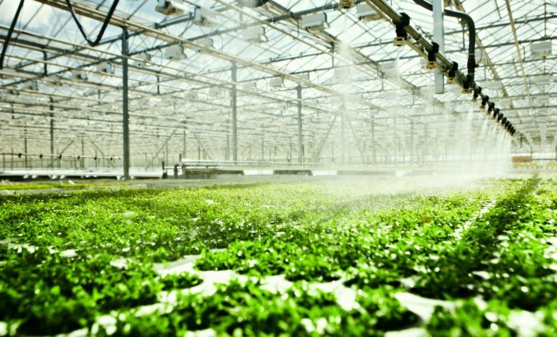 Estufa com sistema de irrigação automatizado.