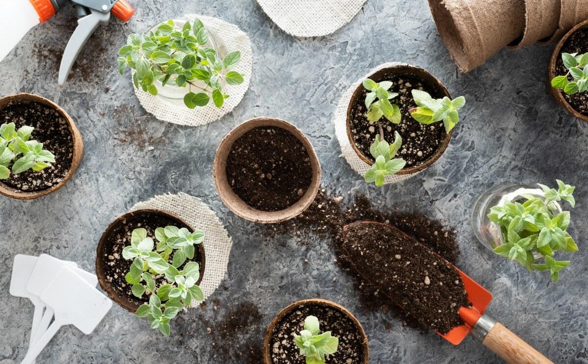 Camadas de terra para plantio de temperos em vasos