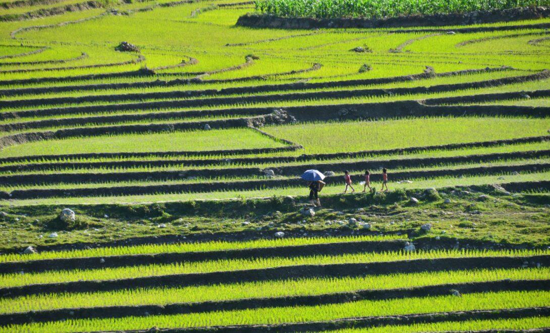 Terraceamento do solo em cultivo de arroz